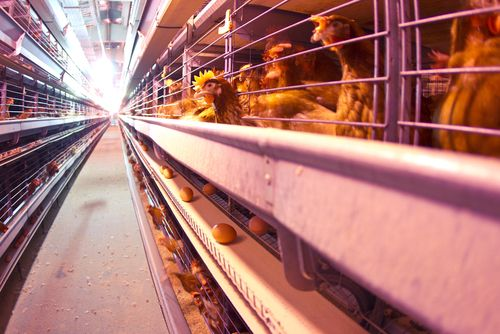 National Egg Farmers Defends Against False Air Emissions Claims